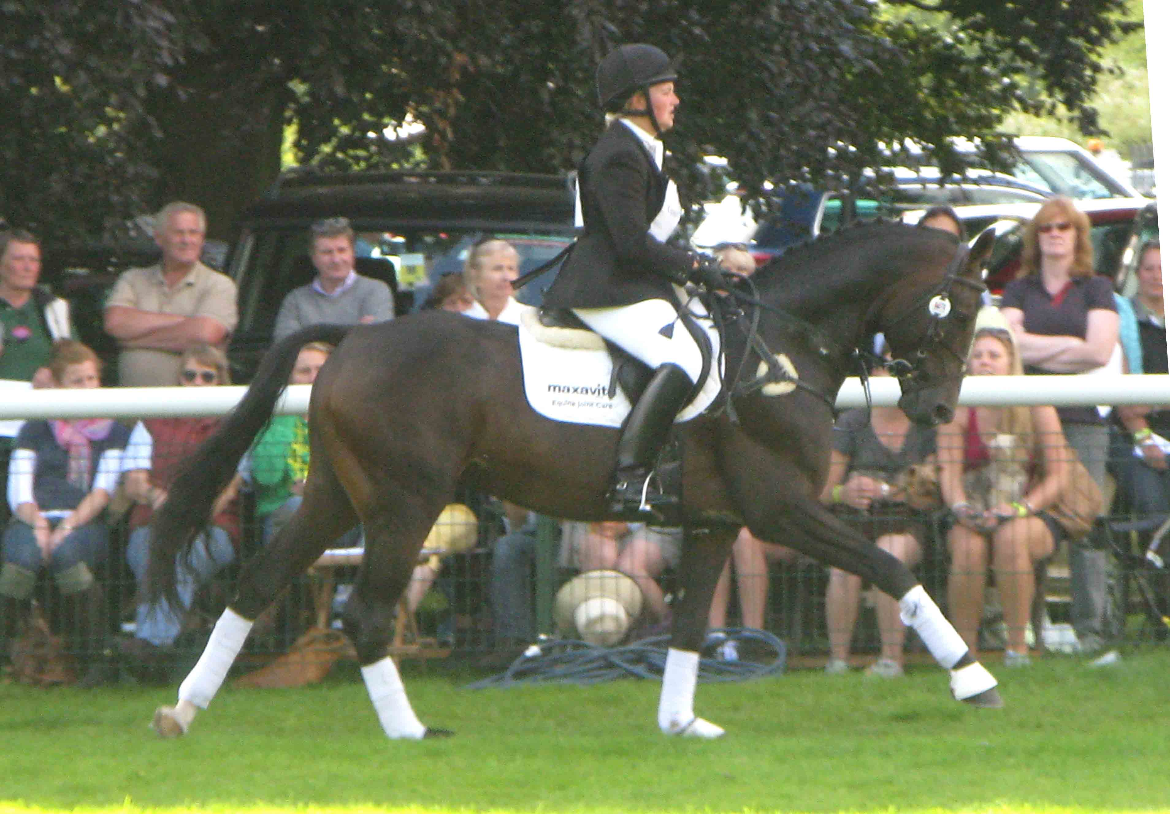 Katy Holder-Vale's Witcham House Farm Stud breeding Hanoverian stallions for dressage introduces Classic Juan.