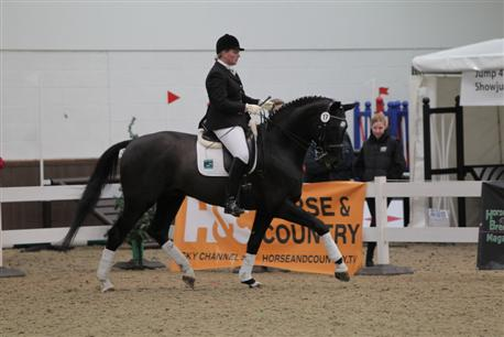 Katy Holder-Vale's Witcham House Farm Stud breeding Hanoverian stallions for dressage introduces Elroon.