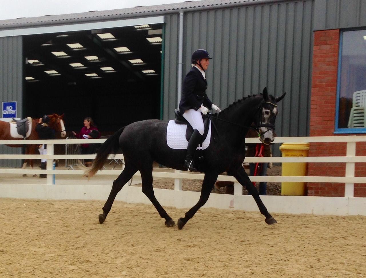 http://www.hanoverianstud.com/images/horses_for_sale/newpics/Marmite1-new.jpg