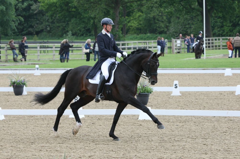 Katy Holder-Vale's Witcham House Farm Stud breeding Rhienland stallions for dressage introduces Samba Hit III.