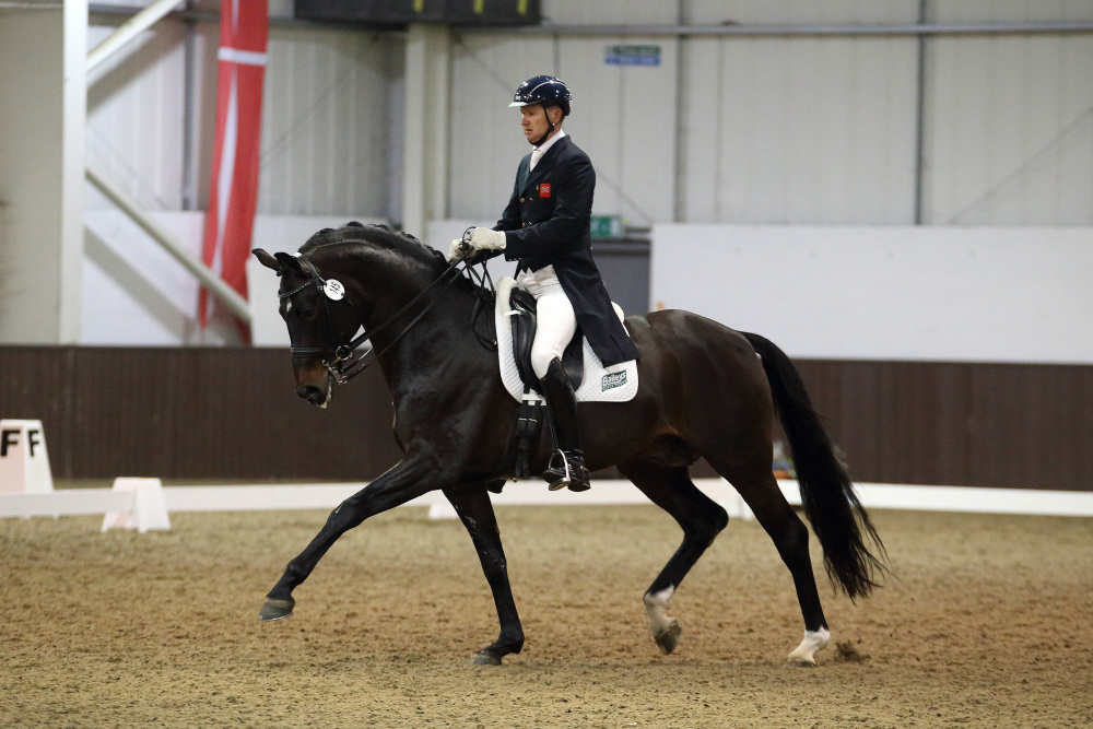 Katy Holder-Vale's Witcham House Farm Stud breeding Rhineland stallions for dressage introduces Samba Hit III.